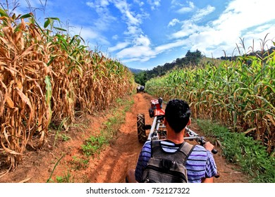 Young farmer driving the tractor in the cornfield at the corn harvest