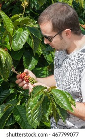 Young farmer examining a mature of coffee beans in sunny day