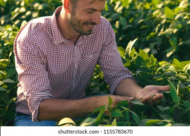 Young farmer in filed examining soybean corp.