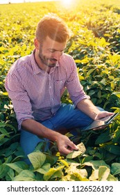 Young farmer in filed holding tablet in his hands and examining soybean corp.
