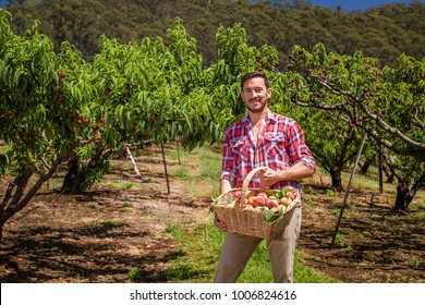 Young farmer with freshly picked basket of peaches