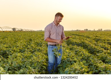 Young farmer standing in filed examining soybean corp.