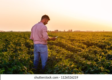Young farmer standing in filed holding phone in his hands and examining soybean corp at sunset.