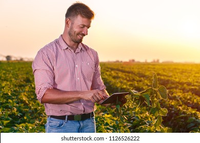 Young farmer standing in filed holding tablet in his hands and examining soybean corp at sunset.