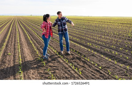 Young farmers examing planted young corn in spring