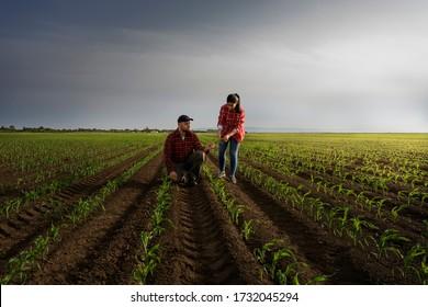 Junglandwirte, die im Frühjahr Jungmais anpflanzen