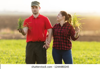 Young farmers examing planted wheat field