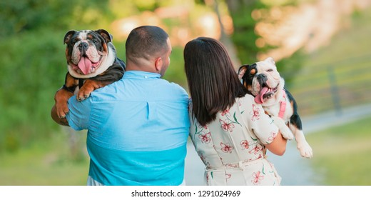 A young, fashionable,  engaged couple walks while carrying two happy English Bulldogs