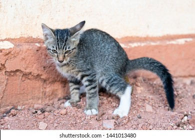Young feline cat shudder while defecate on ground