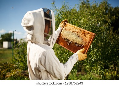 A young female beekeeper in a professional beekeeper costume, inspects a wooden frame with honeycombs holding it in her hands. Collect honey. Beekeeping concept.
