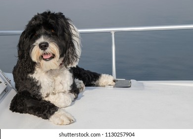 Young female black and white dog laying on the bow of a white boat