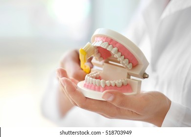 Young female dentist cleaning dental jaw model with toothbrush