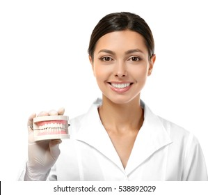 Young female dentist holding dental jaw model isolated on white