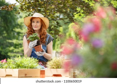 Young female florist taking care of her outdoors garden and planting homegrown herbs, flowers and plants