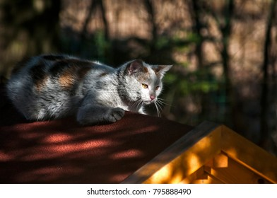 Young female gray cat lying on wooden dog house roof in tree shadow