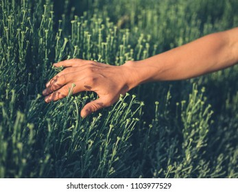 A young female hand is touching some vegetation at sunset