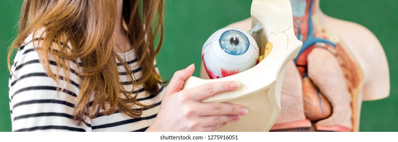 Young female high school student holding human eye model. Student examining Biology class teaching aids.