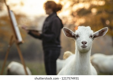 young female painter drawing picture at easel on nature surrounded by grazing goats with funny muzzle foreground,, the girl is inspired by rural atmosphere at sunset among farm animals