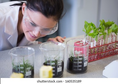 Young female researcher looking at young plants at the laboratory