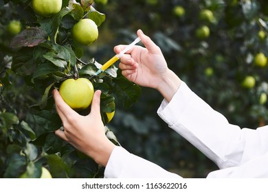 Young female scientist adds chemicals to apple on tree. GMO free concept. Inorganic food products