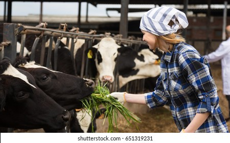 Young Female taking care of cows in cows barn