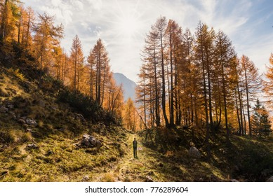 Young female is trekking in autumn, surroneded by beautiful yellow larches in Triglav National Park in Slovenia.