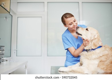 Young female veterinarian in blue uniform hugging and talking to white fluffy labrador lying on table during check-up