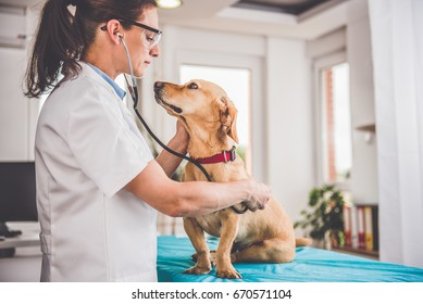 Young female veterinarian checking up the dog at the veterinarian clinic