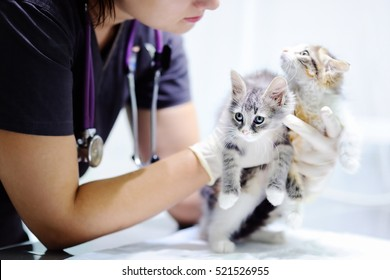 Young female veterinary doctor looking on cute kitten