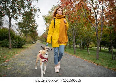 Young female in yellow coat and scarf walking on asphalt path with dog and looking away while spending time in autumn park together