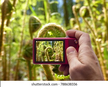 Young fern in camera viewfinder
