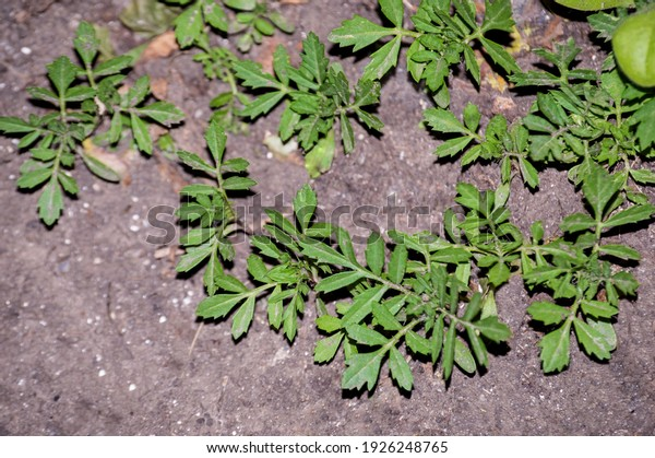 young-flower-sprouts-garden-cultivation-