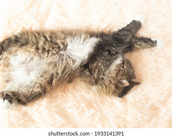 young fluffy ginger Siberian cat lying on bed looking up and relaxing, concept lovely pets, top view