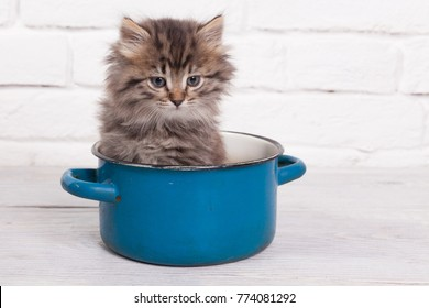 Young fluffy kitten in the pot