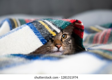 Young Fluffy Tabby Cat on Wooly Blanket