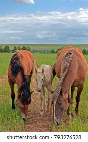young foal and adult horse grazing on green meadow