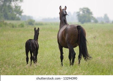 Young Foal and mother