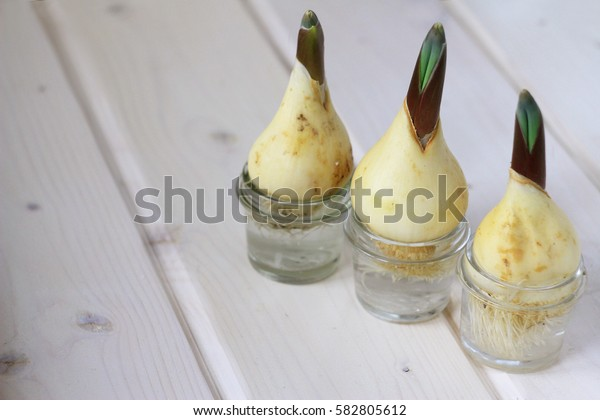 young fresh bulbs of onions in a glass vase on a light wooden table, the concept of spring, health, healthy eating