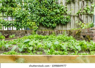 Young fresh vegetables in a small city garden