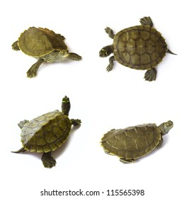 Young freshwater turtles set on white background