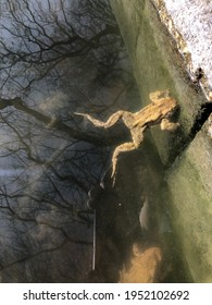 young frogs swim in the lake on the shore