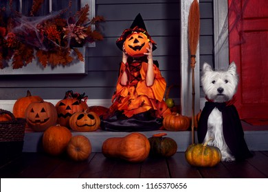 Young funny girl child kid in halloween orange costume playing outdoor with spooky jack pumpkins with scary faces and west highland white terrier dog in black Dracula cloak ready for Halloween