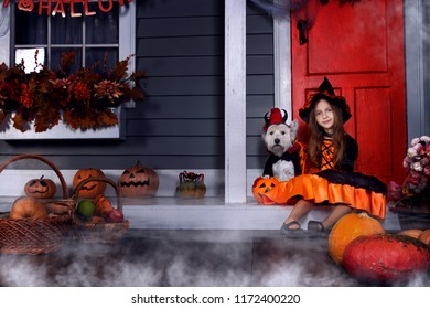 Young funny girl child kid in halloween orange costume playing outdoor with spooky jack pumpkins with scary faces, fog and west highland white terrier dog in black Dracula cloak ready for Halloween