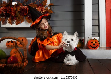 Young funny girl kid child in halloween orange costume of witch and black hat playing outdoor decorated with jack spooky pumpkins and leaves with west highland white terrier dog in black Dracula cloak