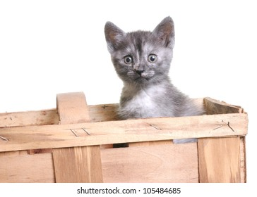 Young funny grey cat