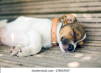 A young furry puppy with a leather collar is sleeping with his eyes closed on a wooden bench.