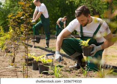Young gardener in dungarees planting flowers in the sunny park