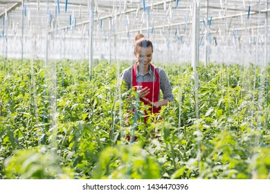Young gardener standing amidst plants while harvesting in greenhouse