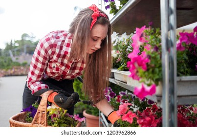 Young gardener woman with basket choosing potted flowers in garden center