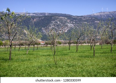 Young gardens in the foothills, foothill belt; submountain gardening and horticulture region. Spring before flowering trees